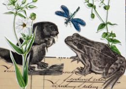Collage mit Frosch, Biber, Käfer und Biber
